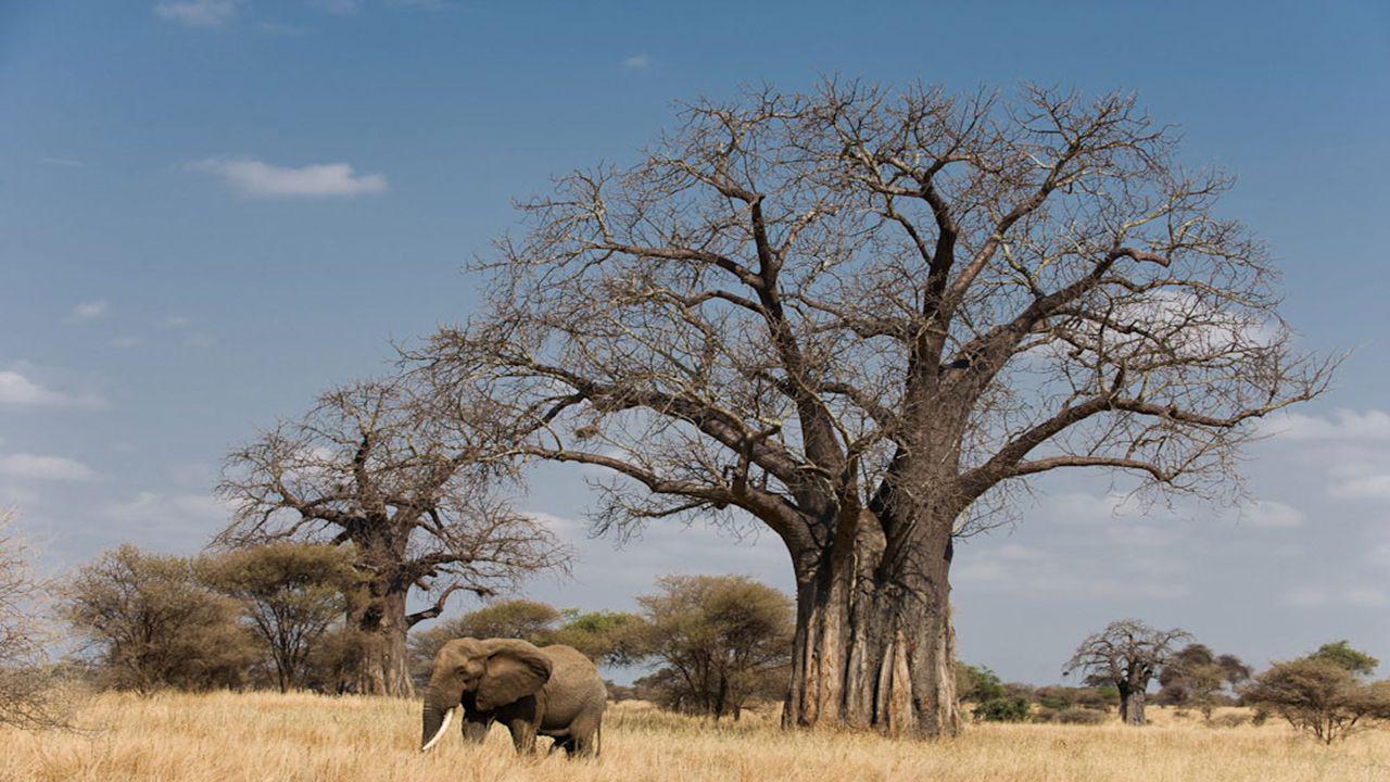 Grote voordelen: goede bereikbaarheid de grootste concentraties wild van Tanzania na de Ngorongoro Krater veel minder toeristen – relatief klein park een aantal diersoorten die u niet in de grote parken in het westen ziet: elanden, oryxen, grantgazellen en giraffegazellen.