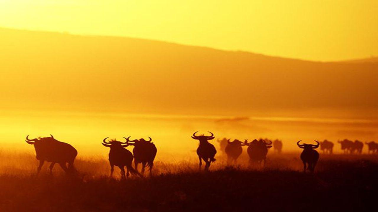 De streek is beroemd door de grote trek die elk jaar plaatsvindt rond oktober:grote tre Een immense migratie van +/- 1.500.000 gnoes en 200.000 zebra's.