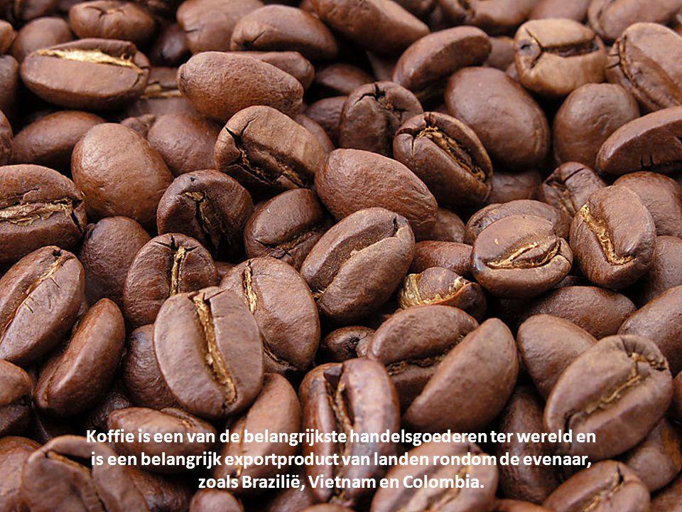 De vrucht van de koffieplant is een besvrucht. Elke bes bevat twee zaadjes, de koffiebonen. Doordat de twee zaadjes bij het rijpen tegen elkaar aandru