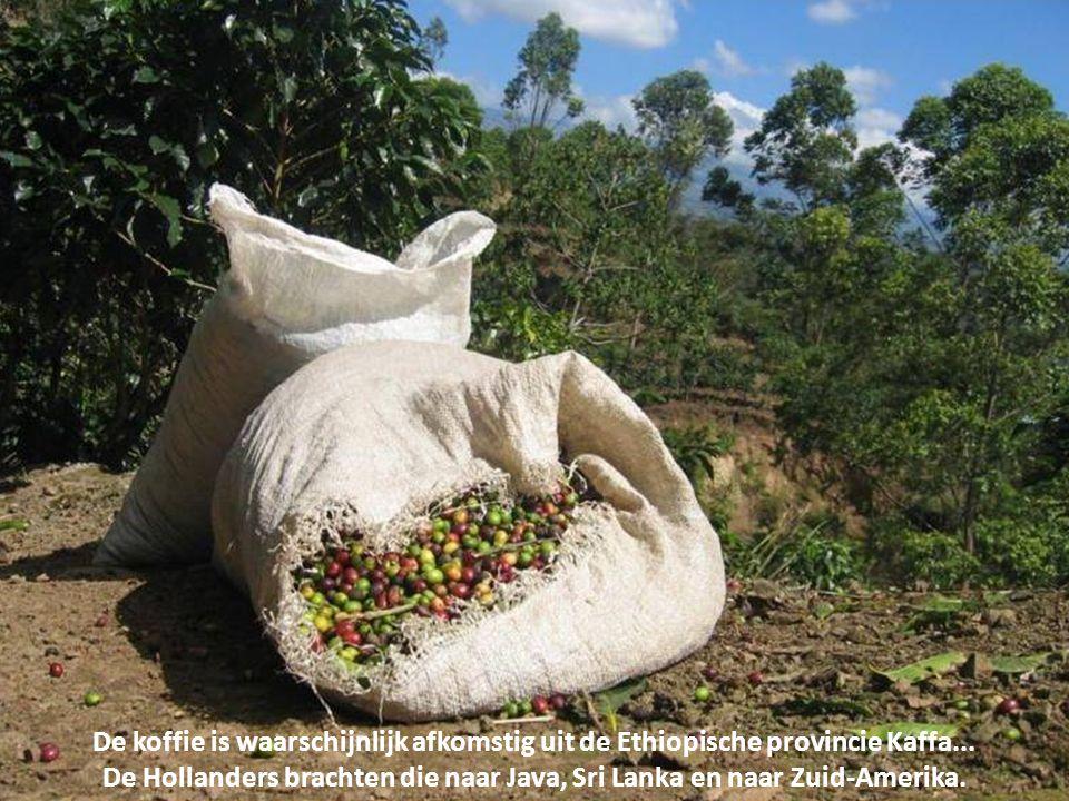 Koffie is een van de belangrijkste handelsgoederen ter wereld en is een belangrijk exportproduct van landen rondom de evenaar, zoals Brazilië, Vietnam