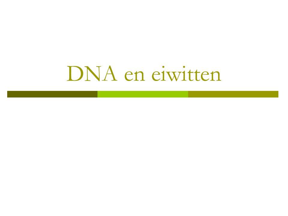 DNA en eiwitten