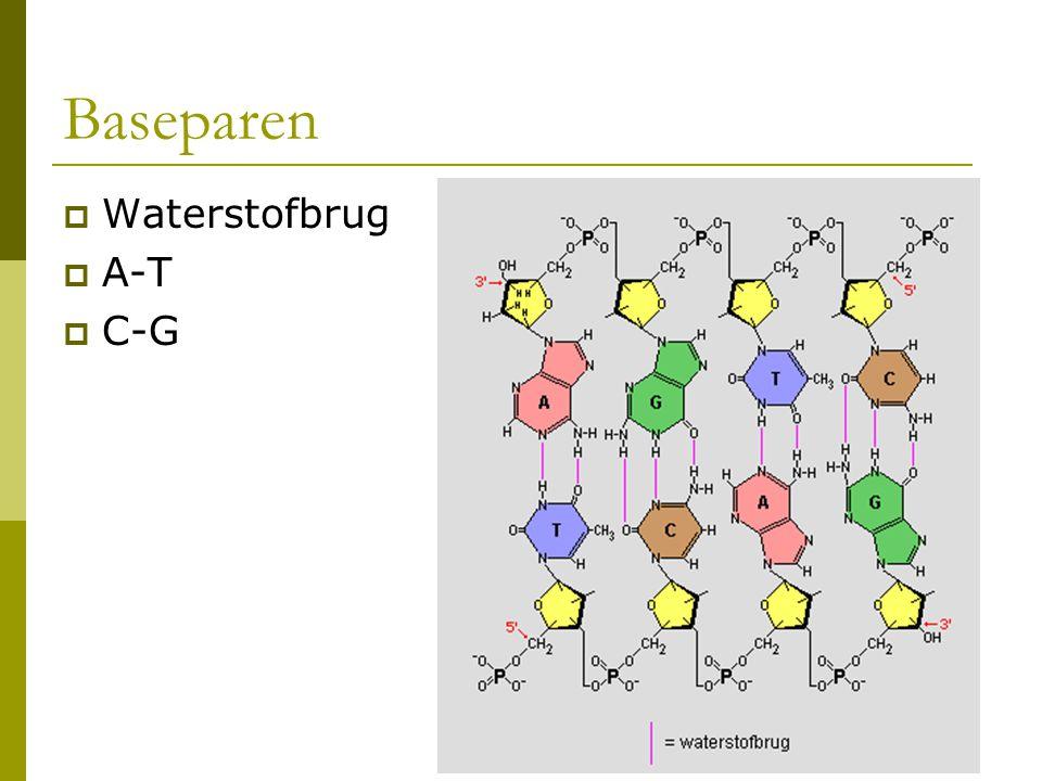 Baseparen  Waterstofbrug  A-T  C-G