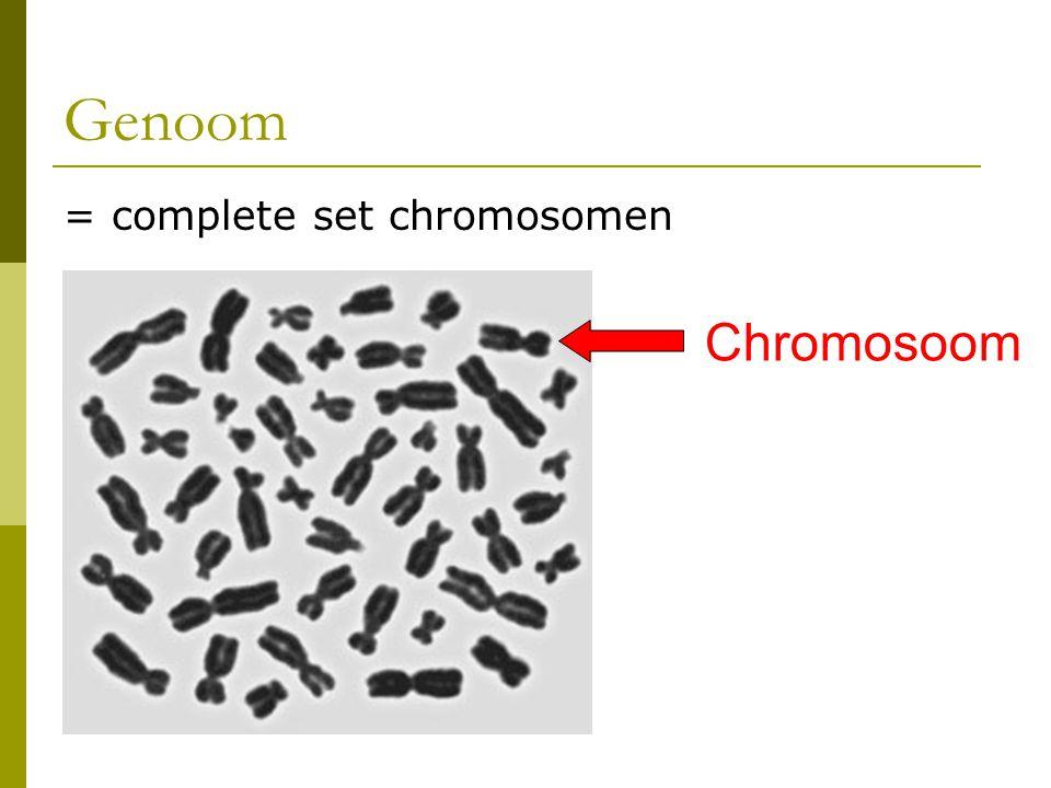 Genoom = complete set chromosomen Chromosoom