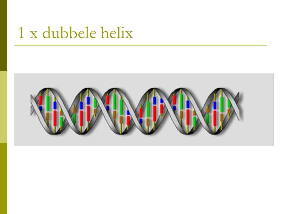 1 x dubbele helix