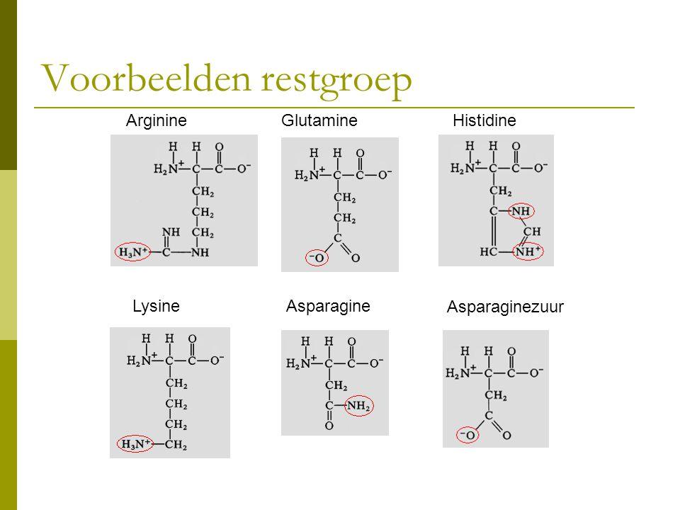 Voorbeelden restgroep Asparagine Glutamine Asparaginezuur Lysine HistidineArginine