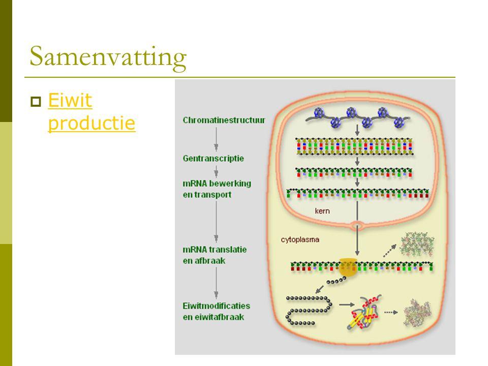 Samenvatting  Eiwit productie Eiwit productie