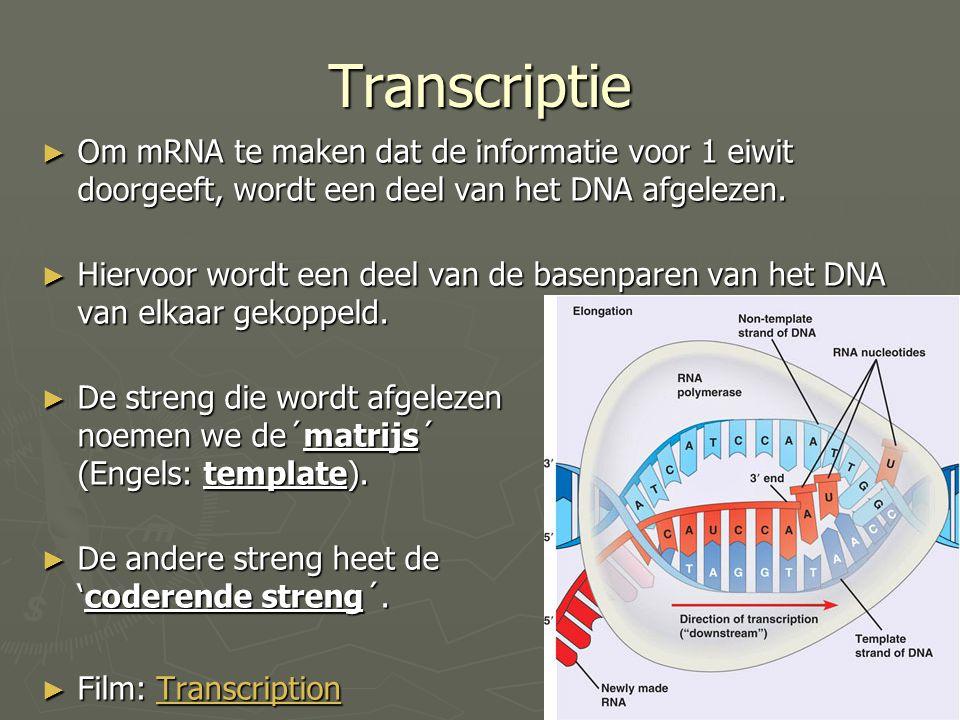 Transcriptie ► Om mRNA te maken dat de informatie voor 1 eiwit doorgeeft, wordt een deel van het DNA afgelezen. ► Hiervoor wordt een deel van de basen