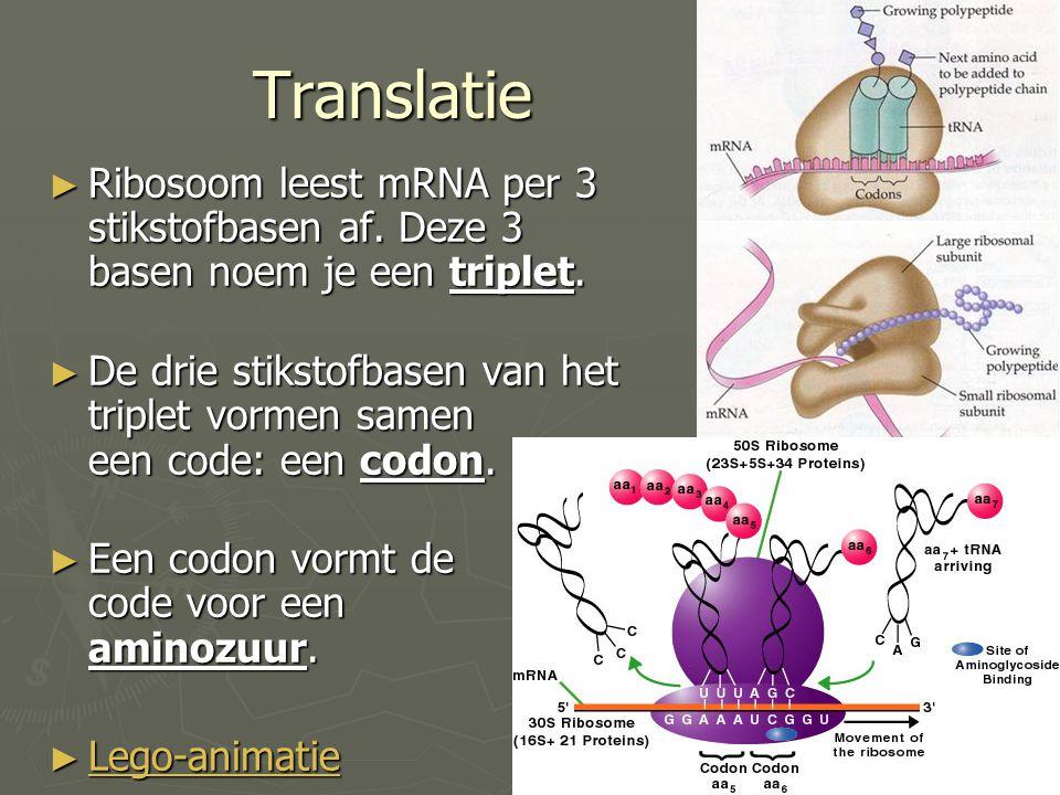 Translatie ► Ribosoom leest mRNA per 3 stikstofbasen af. Deze 3 basen noem je een triplet. ► De drie stikstofbasen van het triplet vormen samen een co