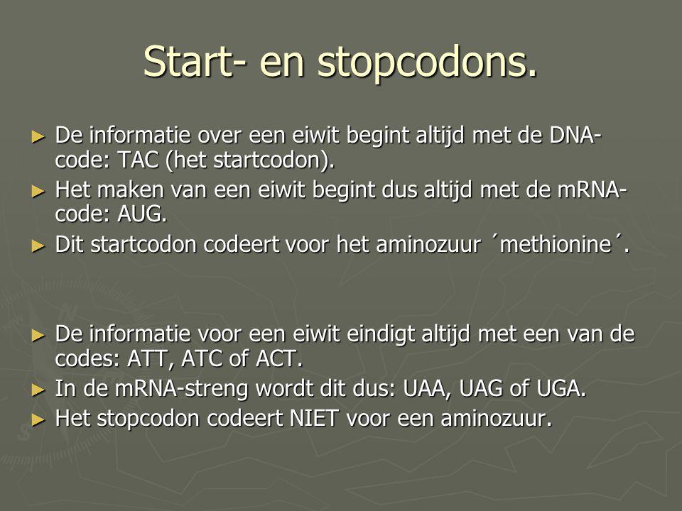 Start- en stopcodons. ► De informatie over een eiwit begint altijd met de DNA- code: TAC (het startcodon). ► Het maken van een eiwit begint dus altijd