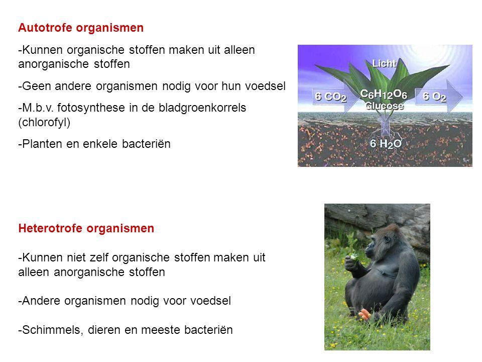1)Koolstofassimilatie (Fotosynthese)  Alleen in autotrofe organismen 2) Voortgezette assimilatie  Zowel in autotrofe als heterotrofe organismen Bron: Bioplek.org