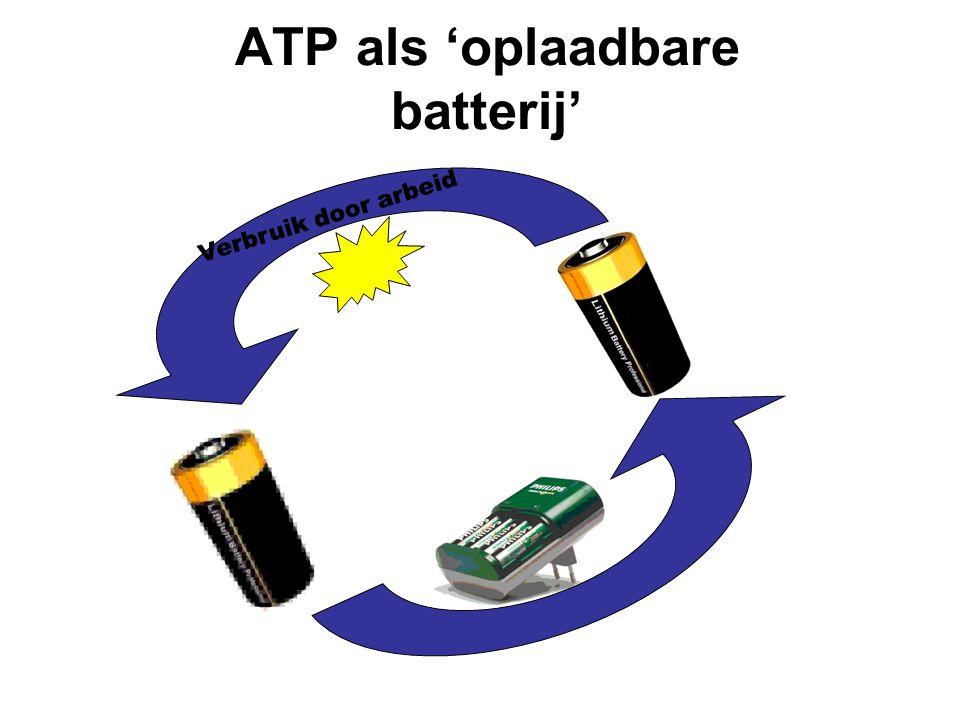 ATP is de universele energieleverancier Verbruik door arbeid ATP ADP + P i Opbouw m.b.v.