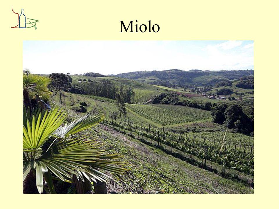 Miolo Alisíos Pinot Grigio Riesling 2013 Herkomst: Campanha - Rio Grande do Sul Wijnmaker: Miolo Druivensoort (en) Pinot Grigio & Riesling Geen houtgebruik Alcohol: 12,5 % Heldere gele kleur.