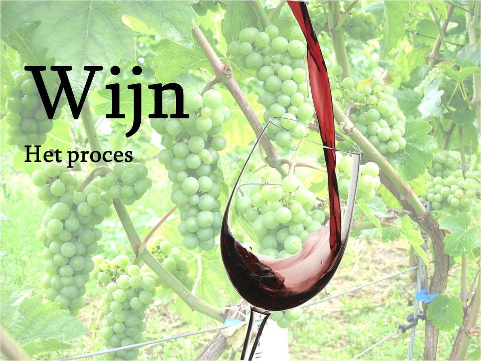 De Wijngaard Druiven groeien in trosvorm aan de wingerd.