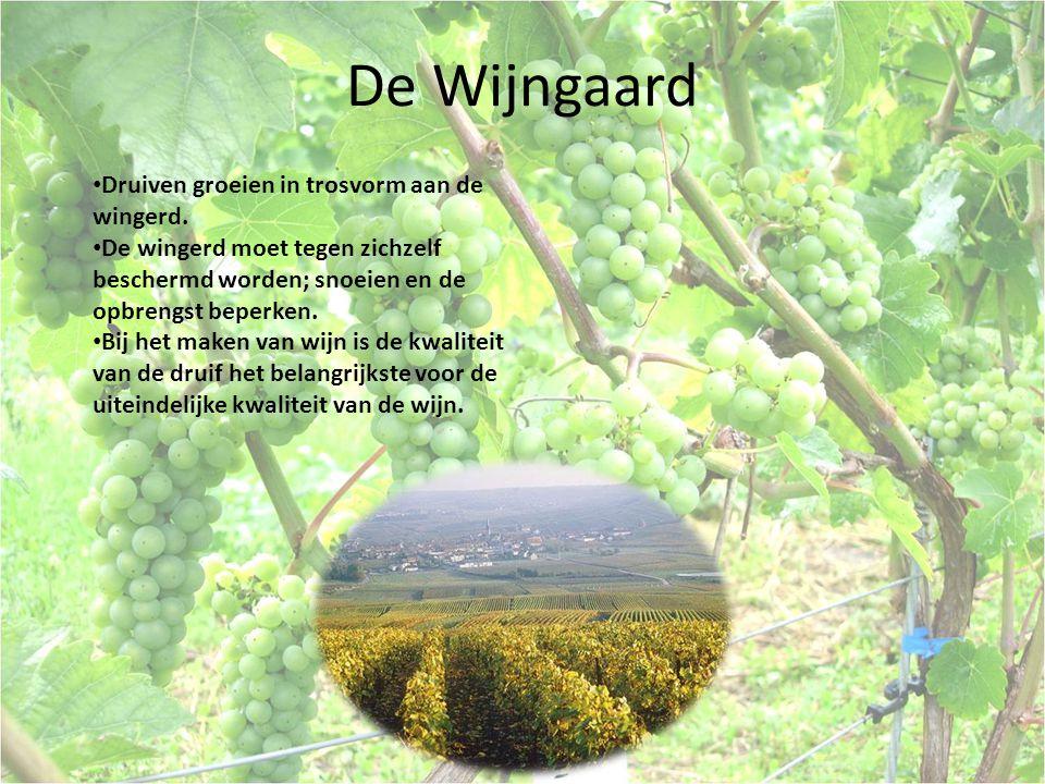 Oogsten De druiven moeten pas geplukt worden als ze voldoende suiker bevatten, het gewenste zuurgehalte bereikt is en er voldoende smaak en kleur in de bes zit.