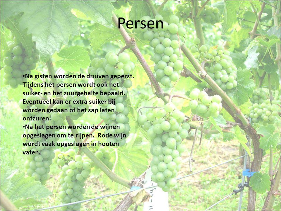 Persen Na gisten worden de druiven geperst.