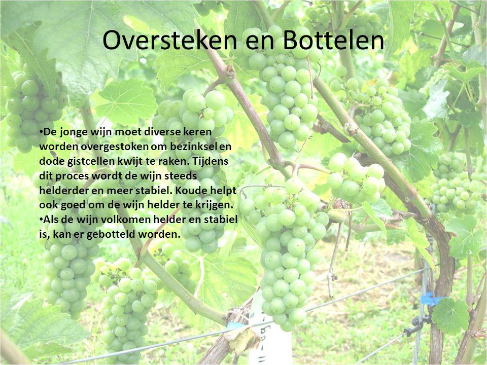 Oversteken en Bottelen De jonge wijn moet diverse keren worden overgestoken om bezinksel en dode gistcellen kwijt te raken. Tijdens dit proces wordt d