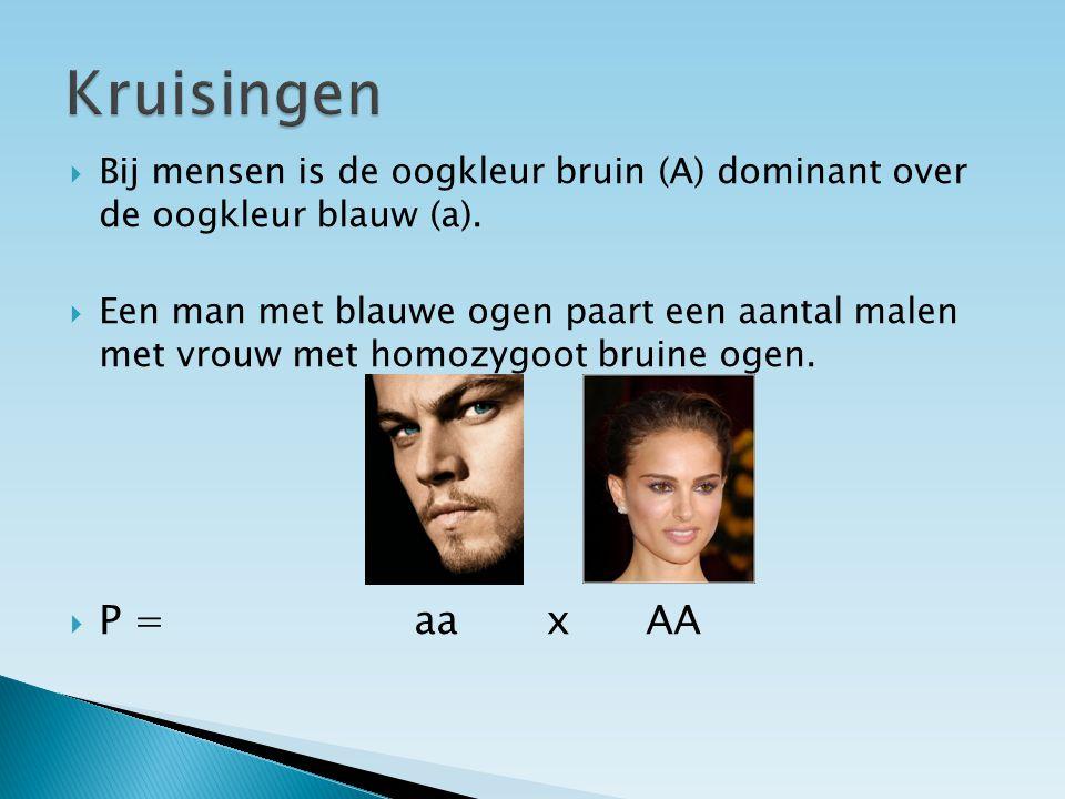  Bij mensen is de oogkleur bruin (A) dominant over de oogkleur blauw (a).
