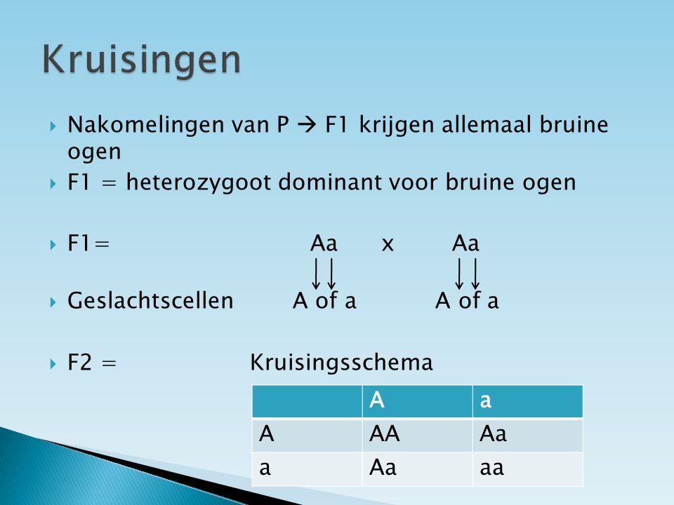  Nakomelingen van P  F1 krijgen allemaal bruine ogen  F1 = heterozygoot dominant voor bruine ogen  F1= Aa x Aa  Geslachtscellen A of a A of a  F2 = Kruisingsschema Aa AAAAa a aa