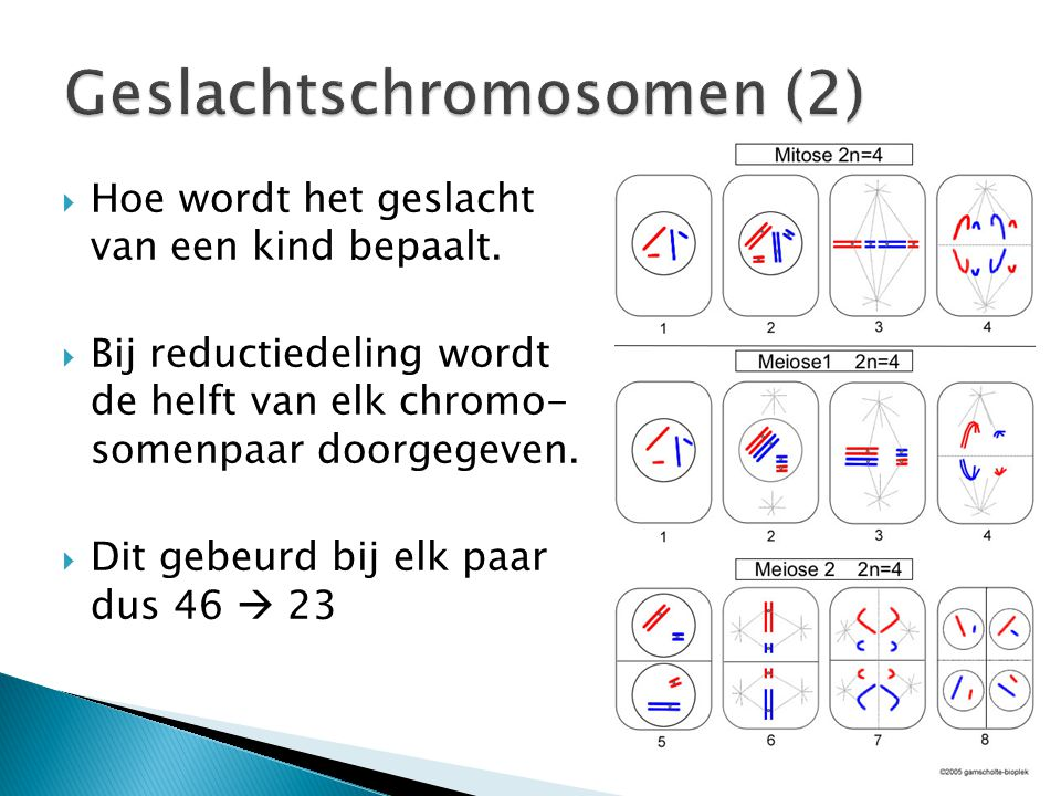  Bij reductiedeling delen dus ook de geslachtschromosomen.