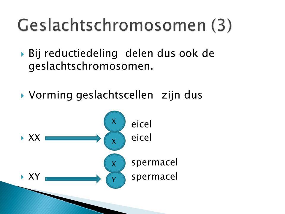 Hoe wordt het geslacht bepaald? eicel + spermacel  embryo X X X Y + +   Meisje Jongen