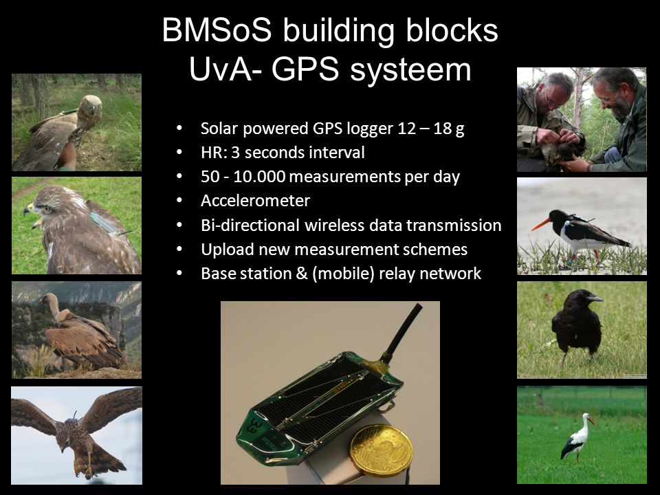 Solar powered GPS logger 12 – 18 g HR: 3 seconds interval 50 - 10.000 measurements per day Accelerometer Bi-directional wireless data transmission Upload new measurement schemes Base station & (mobile) relay network BMSoS building blocks UvA- GPS systeem