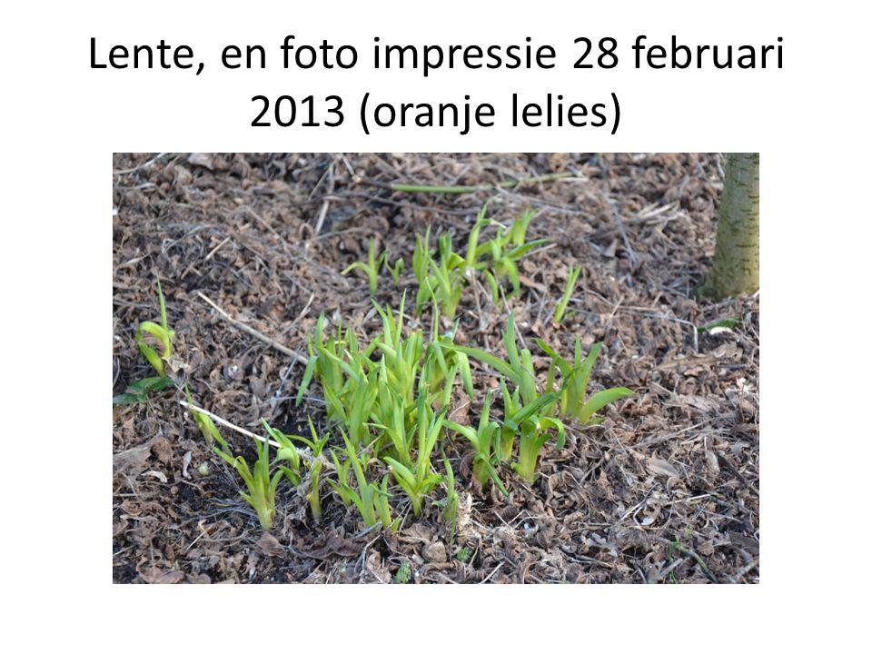 Lente, en foto impressie 28 februari 2013 (oranje lelies)