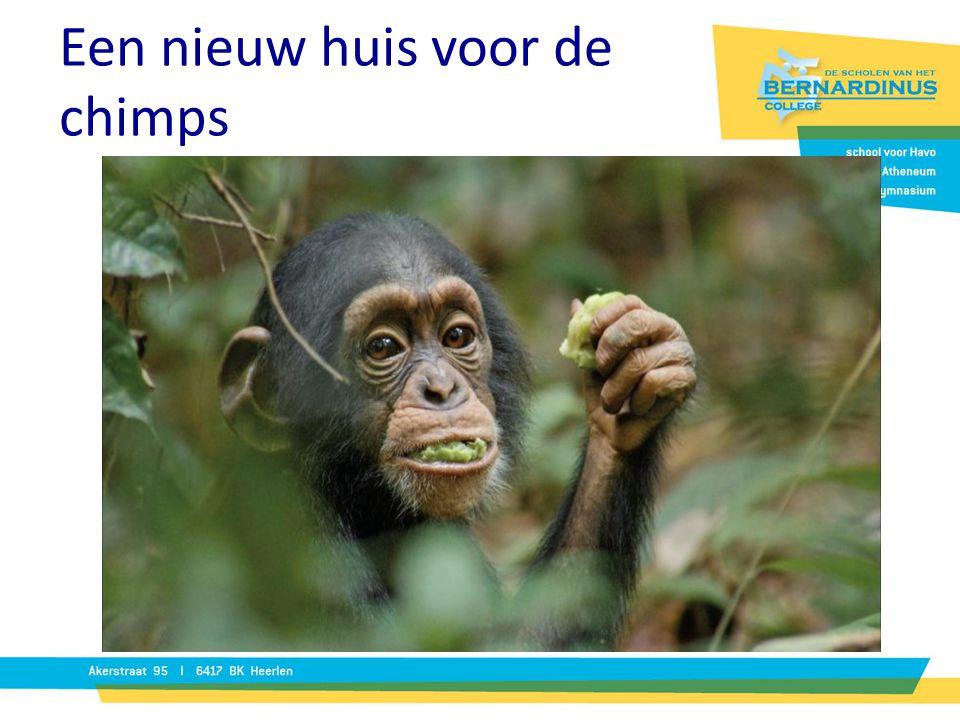Een nieuw huis voor de chimps Beroep: dierentuinontwerper Opdrachtgever: directie dierentuin Opdracht: ontwerp een verblijf voor een nieuwe groep chim