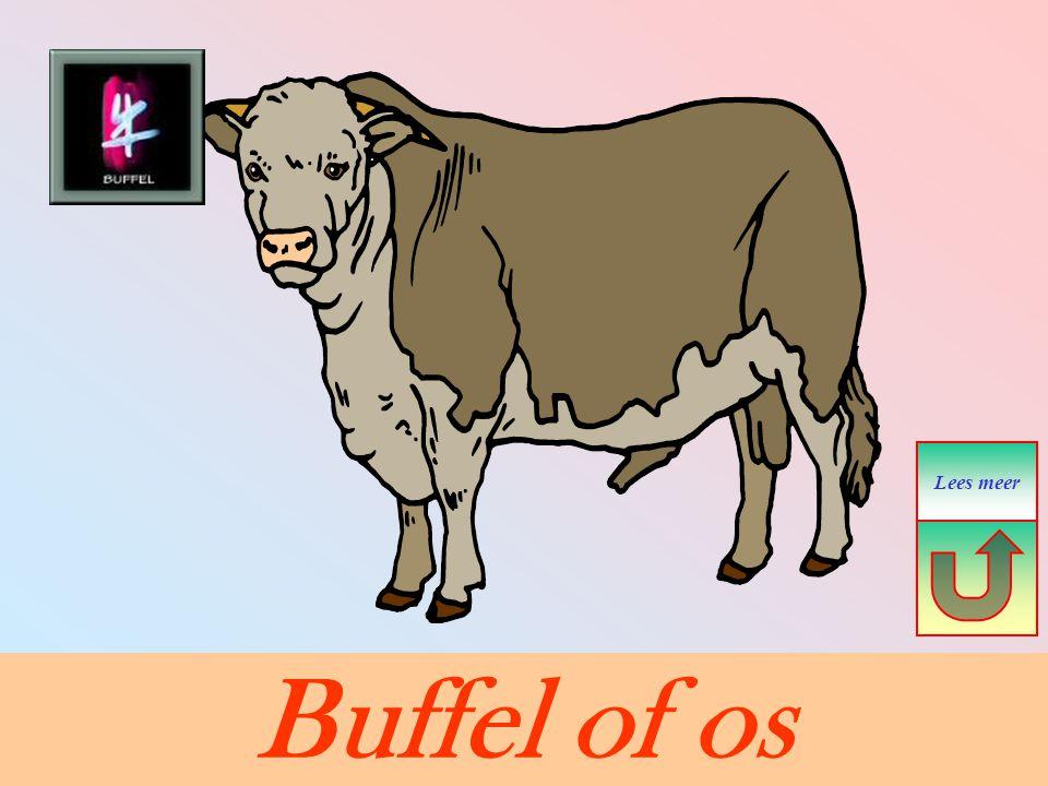 Buffel of os Lees meer