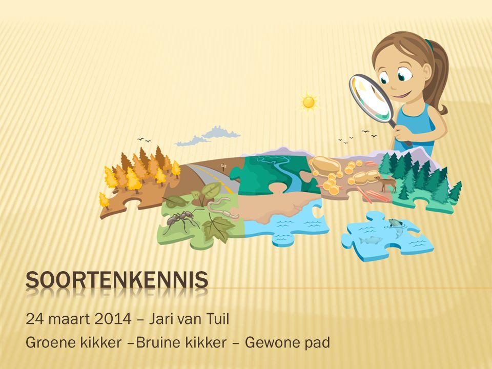 24 maart 2014 – Jari van Tuil Groene kikker –Bruine kikker – Gewone pad
