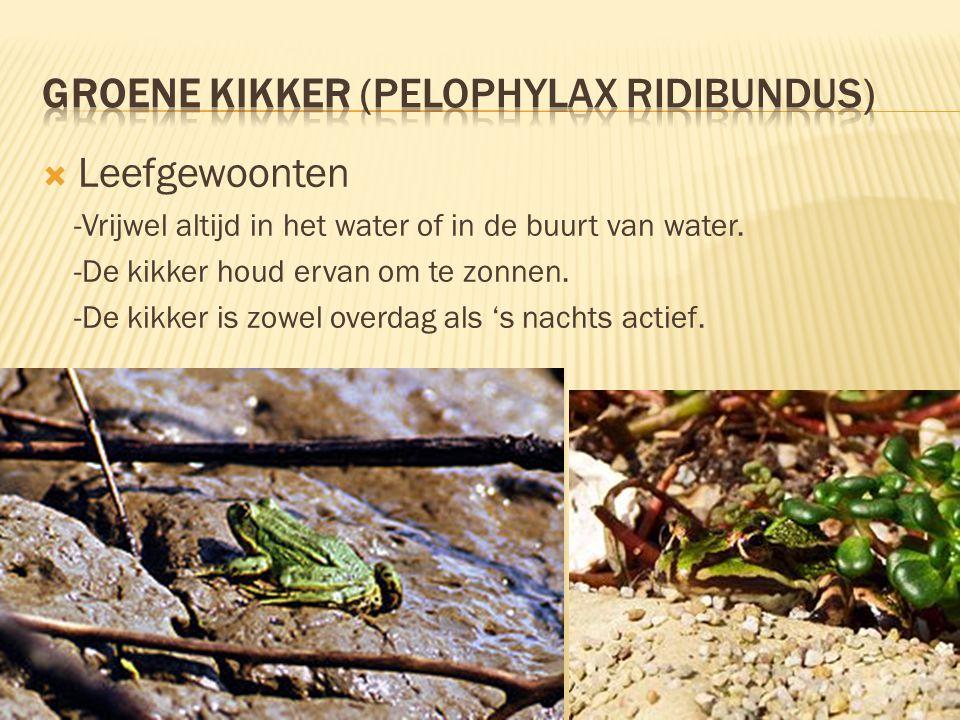  Voortplanting & Verspreiding  -Paringsplek: in het water.