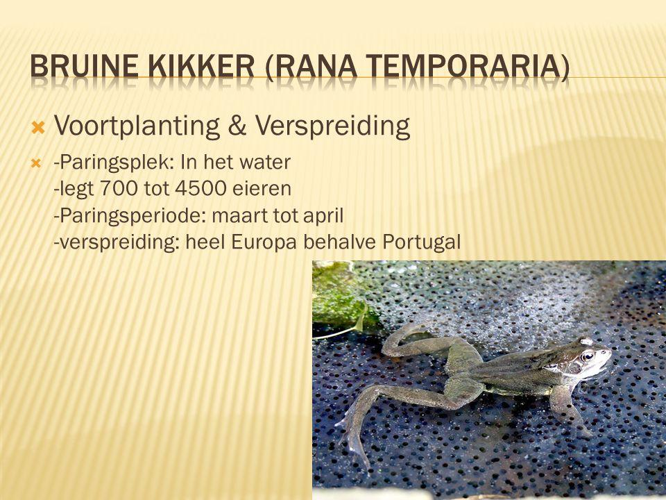  Voortplanting & Verspreiding  -Paringsplek: In het water -legt 700 tot 4500 eieren -Paringsperiode: maart tot april -verspreiding: heel Europa behalve Portugal