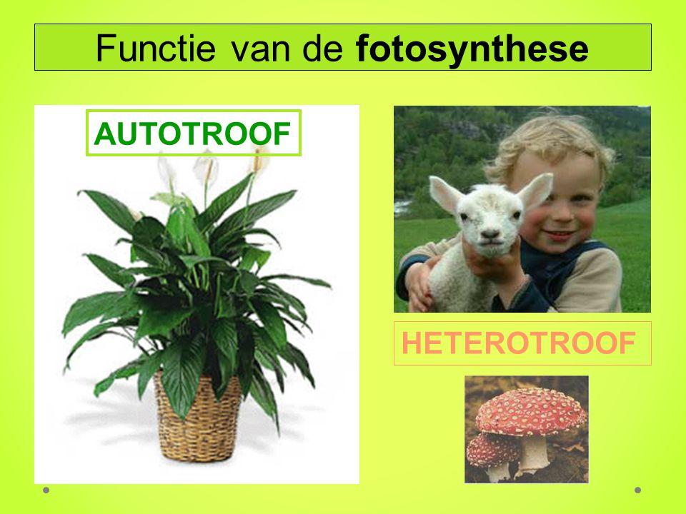 AUTOTROOF HETEROTROOF Functie van de fotosynthese