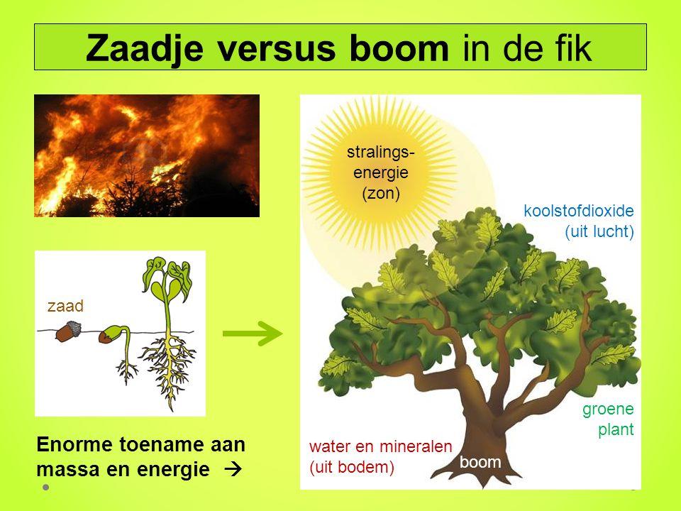 Enorme toename aan massa en energie  stralings- energie (zon) groene plant water en mineralen (uit bodem) koolstofdioxide (uit lucht) Zaadje versus b