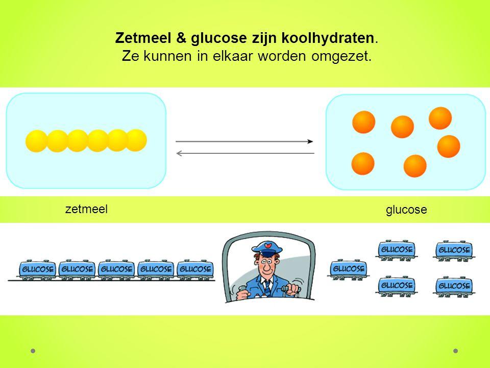 Zetmeel & glucose zijn koolhydraten. Ze kunnen in elkaar worden omgezet. zetmeel glucose