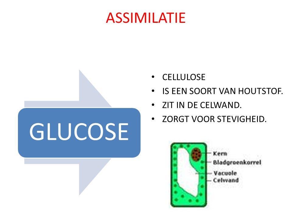 ASSIMILATIE GLUCOSE CELLULOSE IS EEN SOORT VAN HOUTSTOF. ZIT IN DE CELWAND. ZORGT VOOR STEVIGHEID.