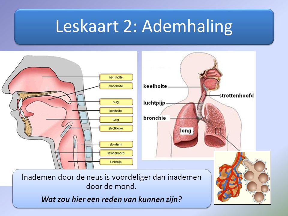 Leskaart 2: Ademhaling Inademen door de neus is voordeliger dan inademen door de mond. Wat zou hier een reden van kunnen zijn?
