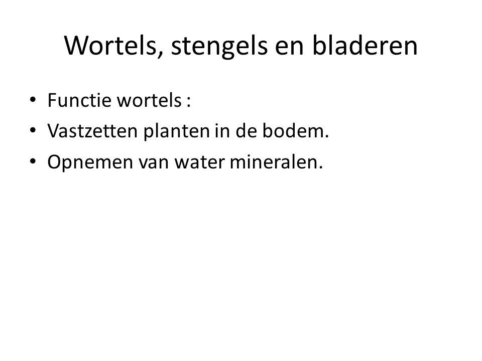 Wortels, stengels en bladeren Functie wortels : Vastzetten planten in de bodem. Opnemen van water mineralen.