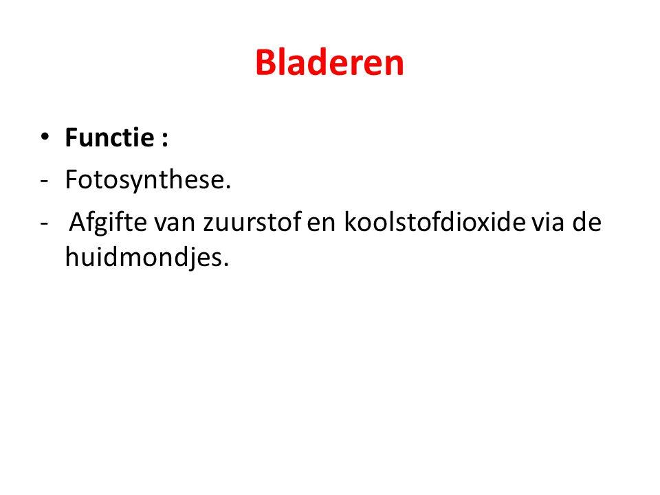 Bladeren Functie : -Fotosynthese. - Afgifte van zuurstof en koolstofdioxide via de huidmondjes.