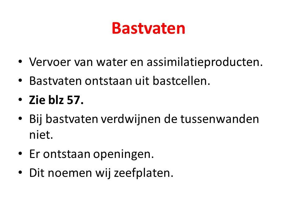 Bastvaten Vervoer van water en assimilatieproducten. Bastvaten ontstaan uit bastcellen. Zie blz 57. Bij bastvaten verdwijnen de tussenwanden niet. Er
