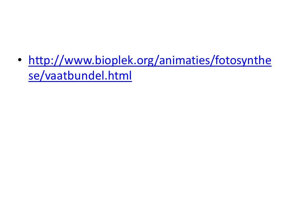 http://www.bioplek.org/animaties/fotosynthe se/vaatbundel.html http://www.bioplek.org/animaties/fotosynthe se/vaatbundel.html