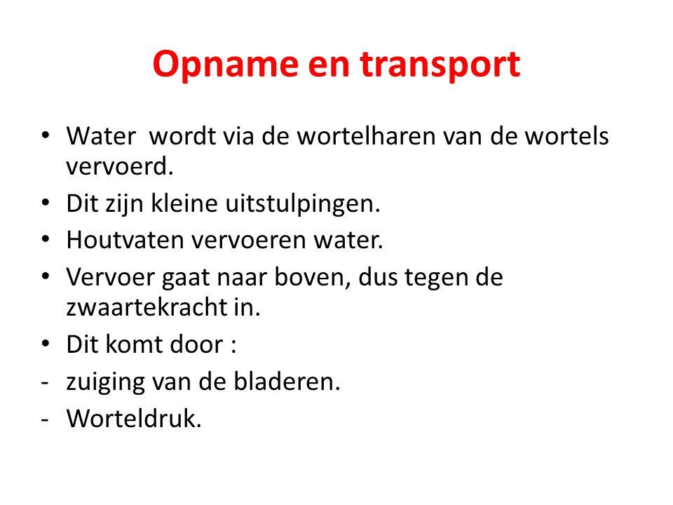 Opname en transport Water wordt via de wortelharen van de wortels vervoerd. Dit zijn kleine uitstulpingen. Houtvaten vervoeren water. Vervoer gaat naa