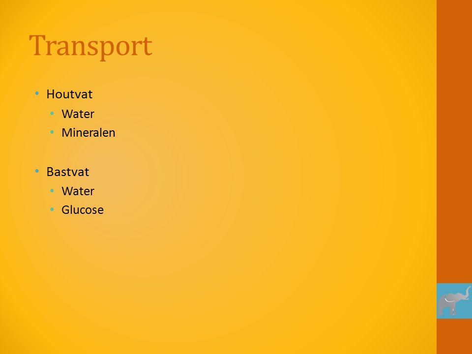 Transport Houtvat Water Mineralen Bastvat Water Glucose