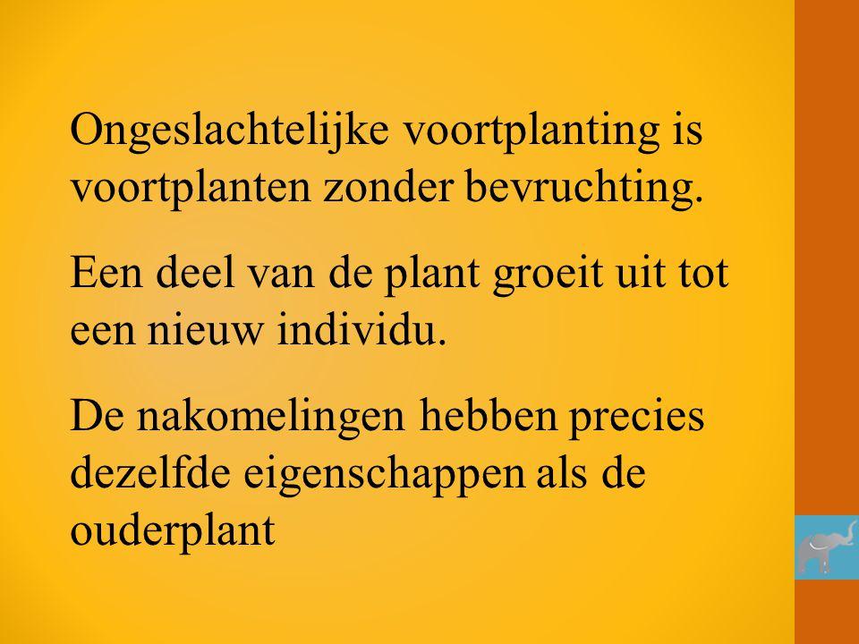 Ongeslachtelijke voortplanting is voortplanten zonder bevruchting. Een deel van de plant groeit uit tot een nieuw individu. De nakomelingen hebben pre
