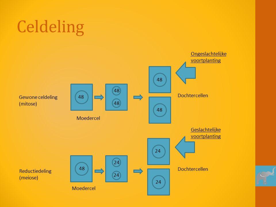 Celdeling 48 24 Moedercel Gewone celdeling (mitose) Reductiedeling (meiose) Dochtercellen Ongeslachtelijke voortplanting Geslachtelijke voortplanting