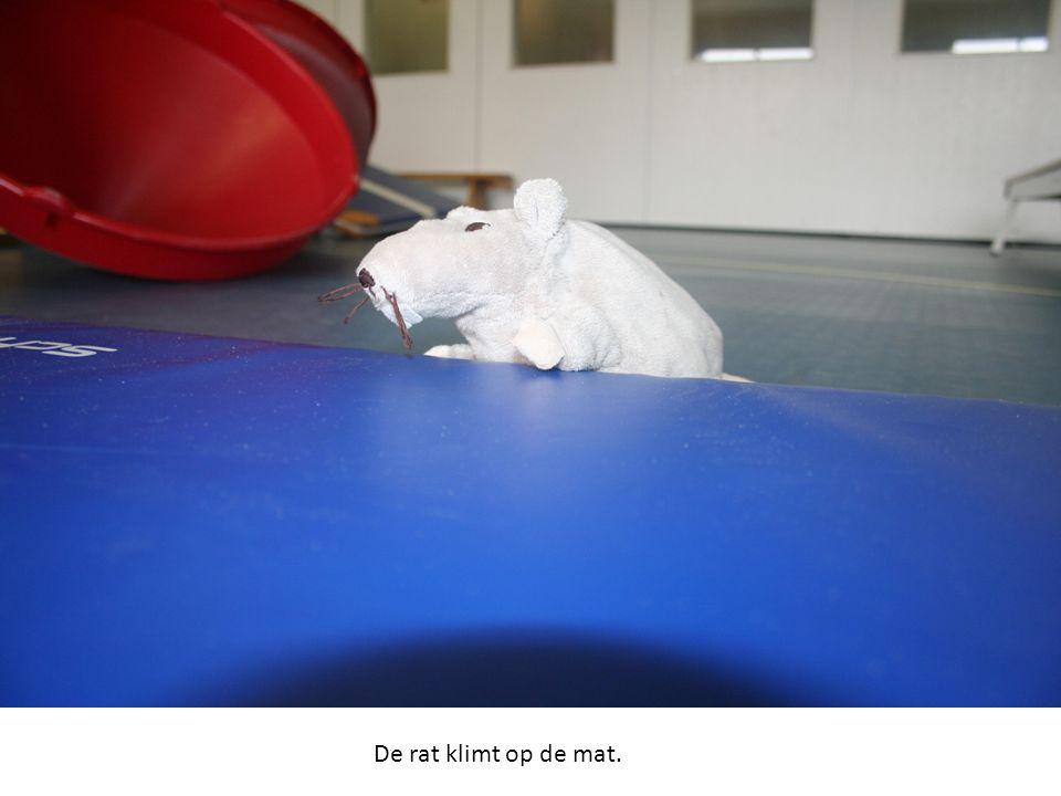 De rat klimt op de mat.