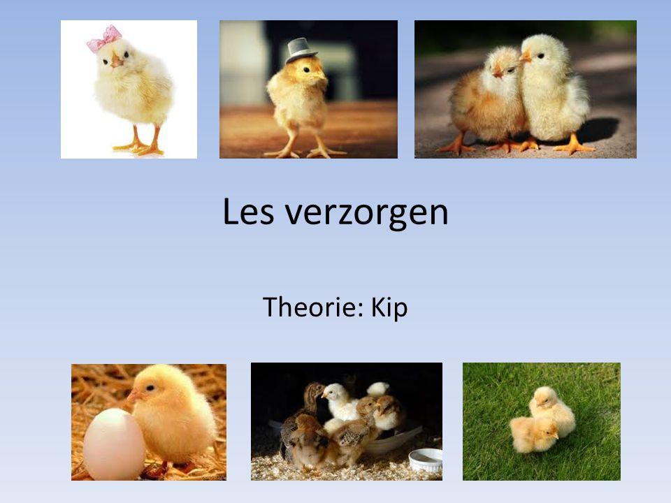 Les verzorgen Theorie: Kip