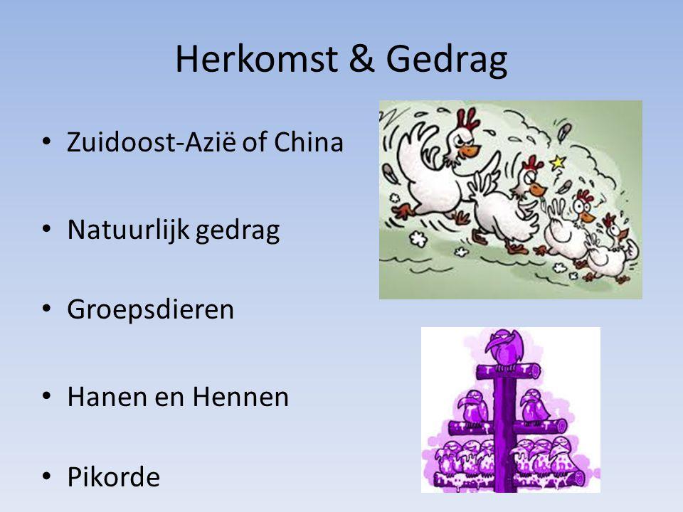 Herkomst & Gedrag Zuidoost-Azië of China Natuurlijk gedrag Groepsdieren Hanen en Hennen Pikorde
