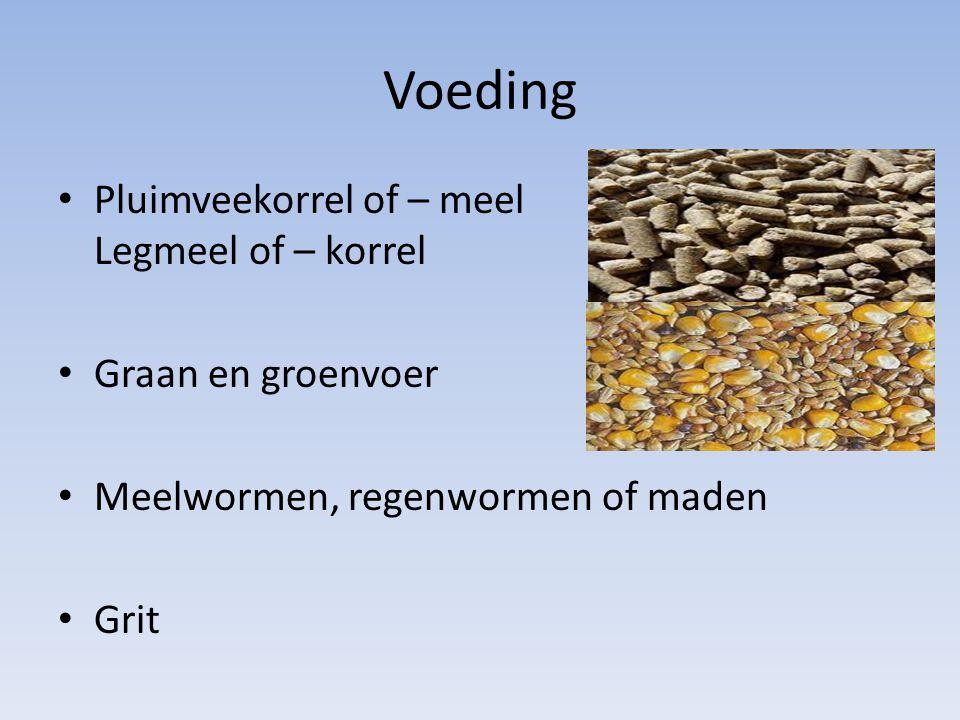 Voeding Pluimveekorrel of – meel Legmeel of – korrel Graan en groenvoer Meelwormen, regenwormen of maden Grit