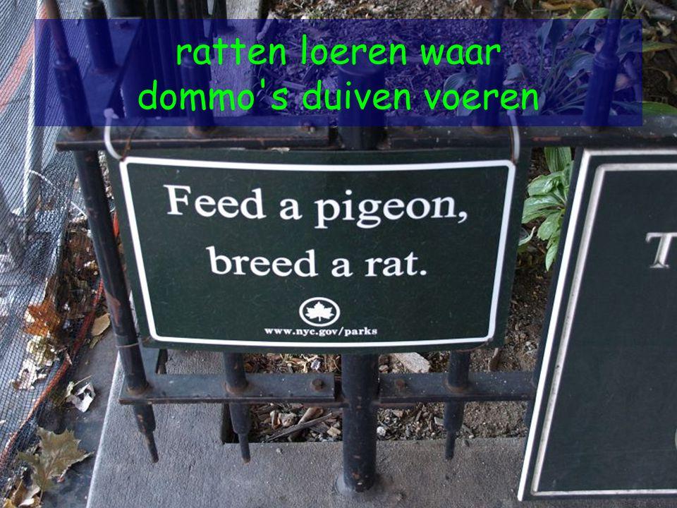 ratten loeren waar dommo's duiven voeren