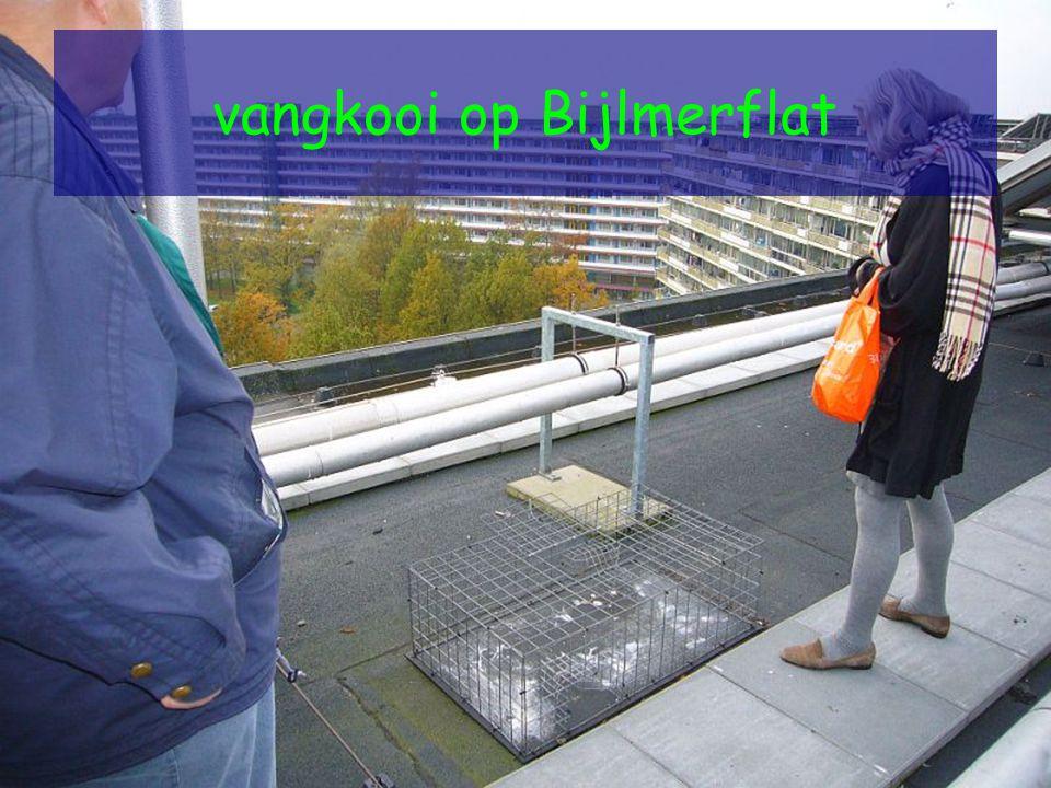 vangkooi op Bijlmerflat